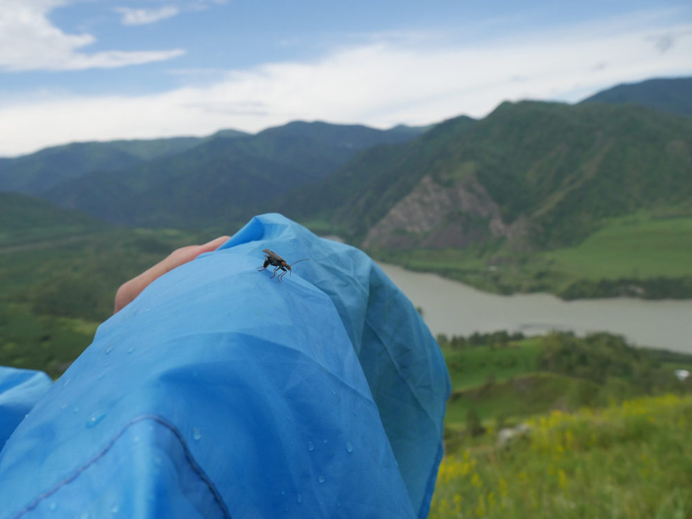 Little bug in the big mountains